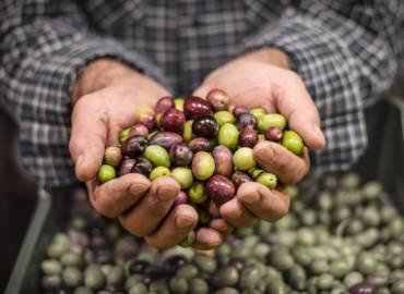 Olio ExtraVergine d'Oliva Lupo: Un Tesoro all'insegna del Biologico
