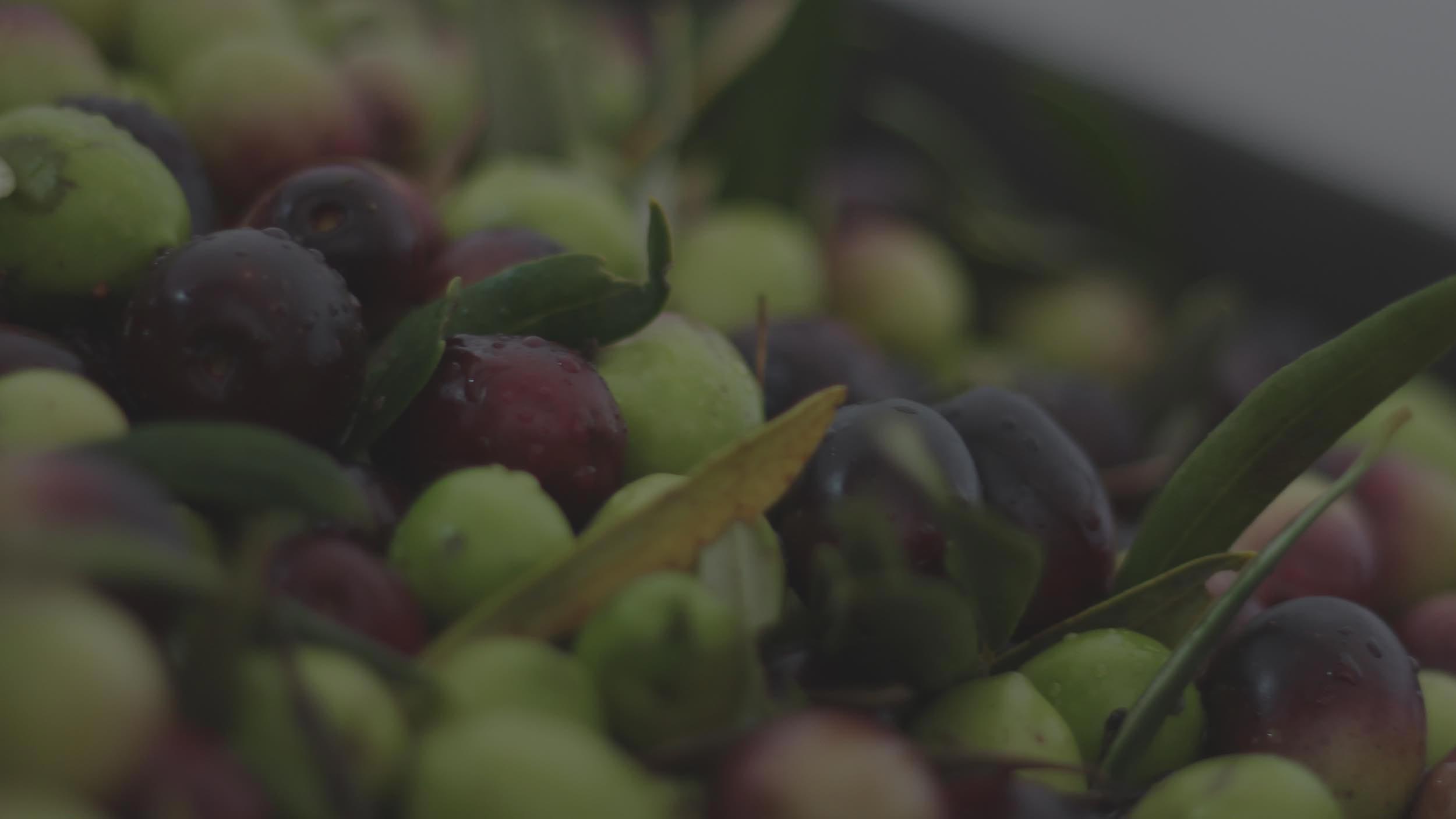 Olio Evo Lupo, Olio Extravergine d'oliva Biologico, Olio Lupo